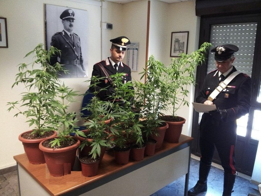 Sequestro di marijuana